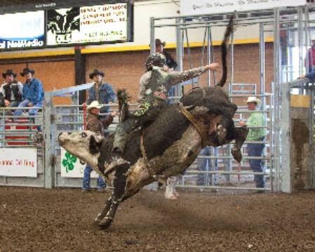 Bare-back bull riding is not for the faint of heart!